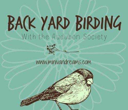 Back Yard Birding with the Audubon Society via Mini Van Dreams #birding #gardening #audubonsociety