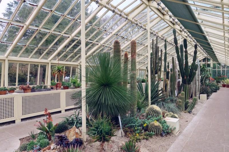 National Botanic Gardens Dublin @minkaguides Cactus