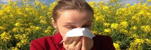 Minnick's allergy season