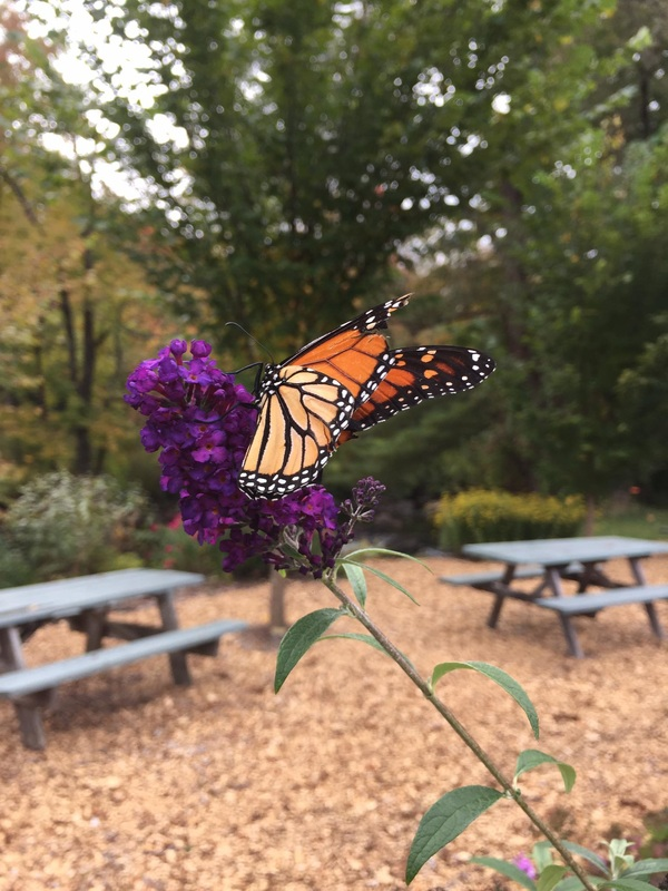 Pasquaney Garden Club   Minot Sleeper Library Those interested in the club may contact Nancy at 744 9485  For more  information on their butterfly garden click here