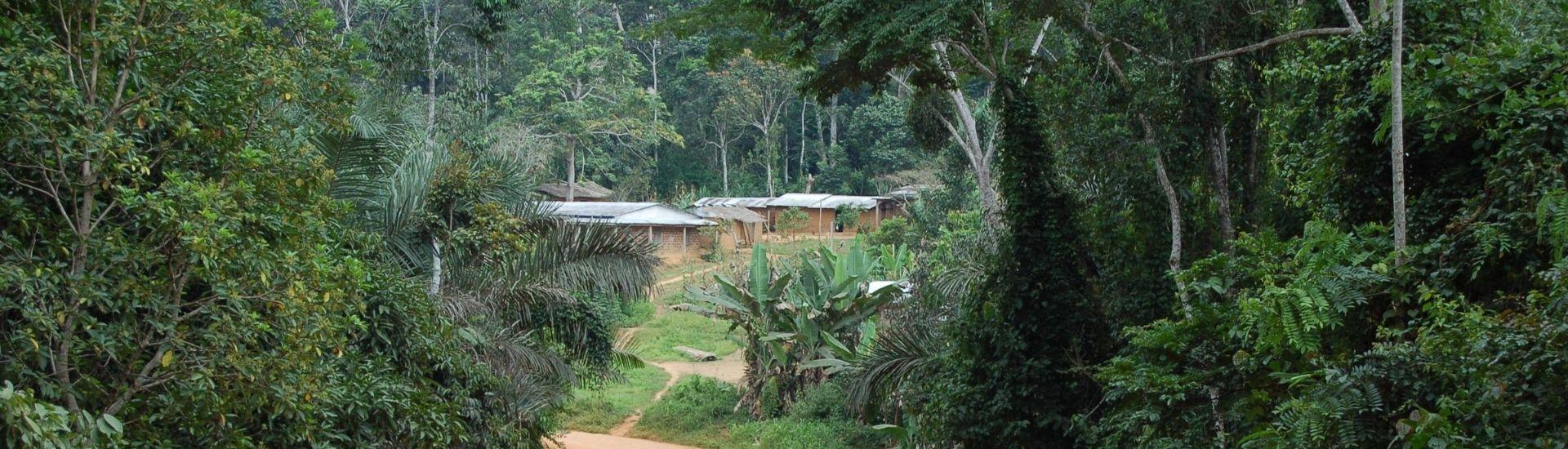 village de forêt afrique