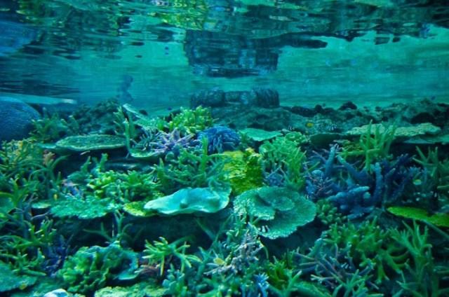 生きた珊瑚礁大水槽