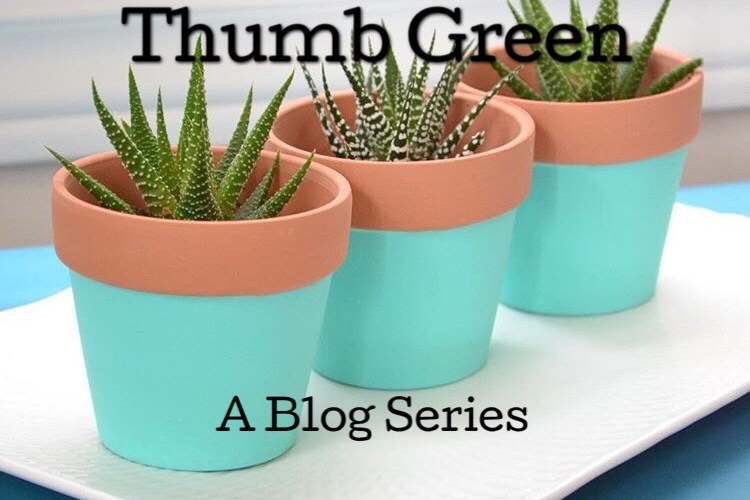 Turning your Black Thumb Green – Part Trois