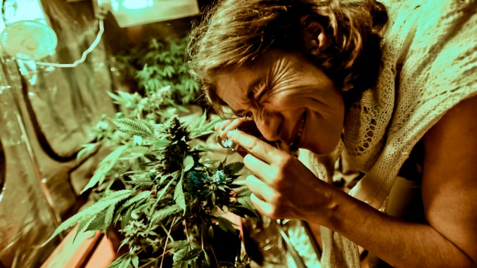 A woman observes inspects a cannabis plant with a magnifying glass. Microsoft recently announced the release of it's seed to sale software, making it the first major tech company to enter the lucrative marijuana market.
