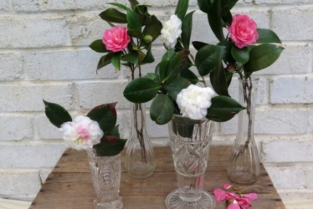 Download Wallpaper Vases To Hire Full Wallpapers
