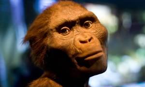 Notre ancêtre Lucy serait morte en tombant d'un arbre
