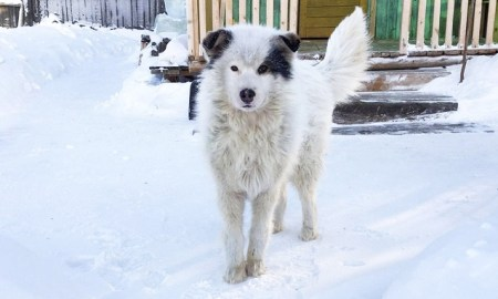 Russie chien sauve enfant du froid