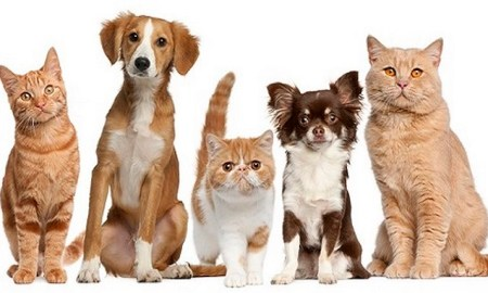 taïwan chiens chats