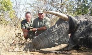Zimbabwe un chasseur meurt écrasé par un éléphant