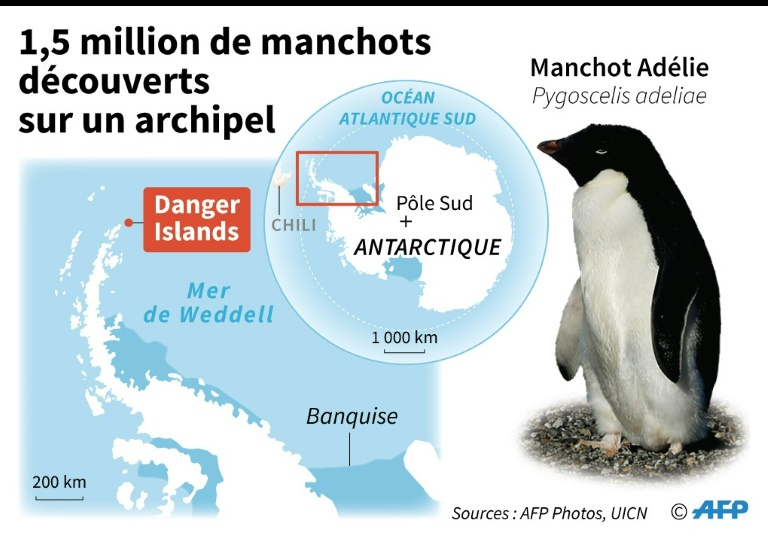 1,5 million de manchots découverts en Antarctique