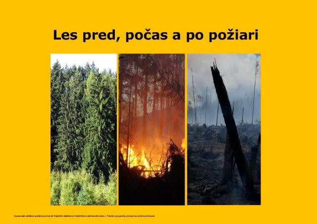 Les pred, počas a po požiari