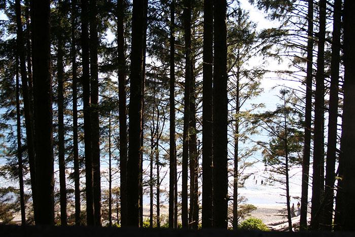 bosque-pacifico-isla-vancouver-roadtrip-canada-mipaseoporelmundo
