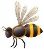 abeille1OK