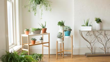Apartment Gardening A Guide