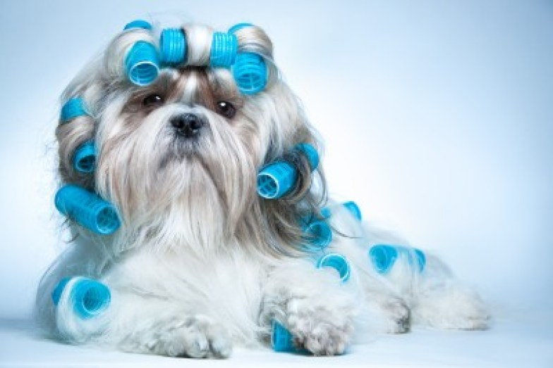 Shih Tzu Essential Supplies