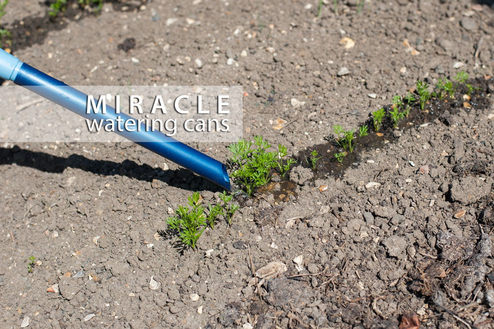 miracle-watering-cans-vegetables-line