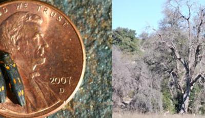 Los Peñasquitos Canyon Preserve Trail Closures