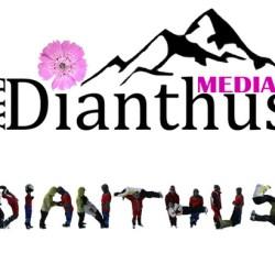 Sondaj Dianthus Medias