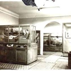 Remember: 120 de ani  Muzeul Alt - Mediasch (1901 -2021)
