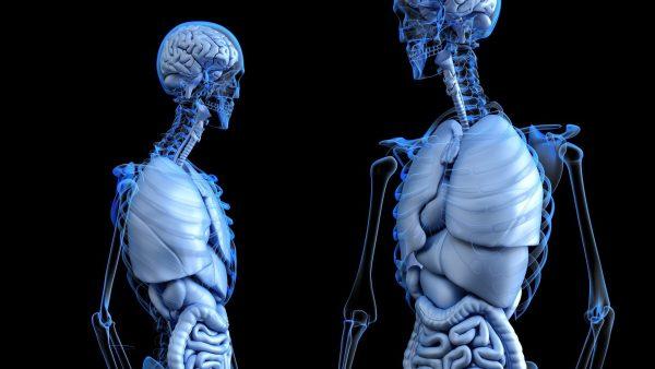 Mirdad fondamenti di anatomia