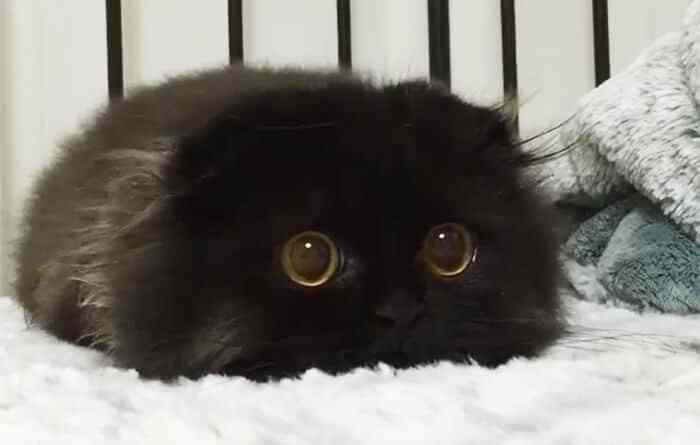 Rozkošná kočka Gizmo má nádherně velké černé oči