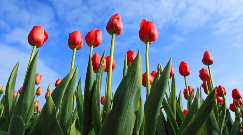 Jak pečovat v květnu o zahradu