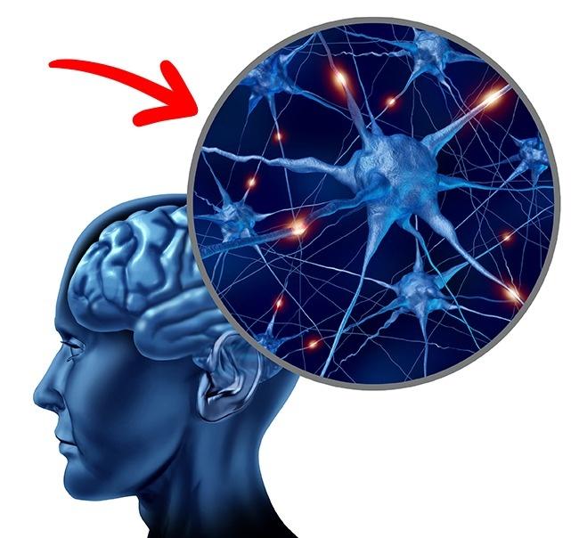 Mozek pod ochranou cholinu