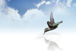 hummingbird in flightpg