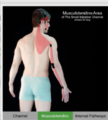 Musculotendino