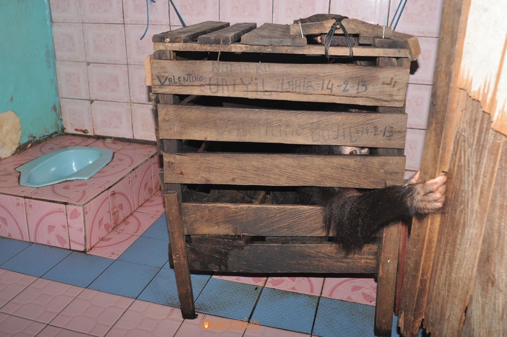 Unyil before, forced to stay in this wooden crate