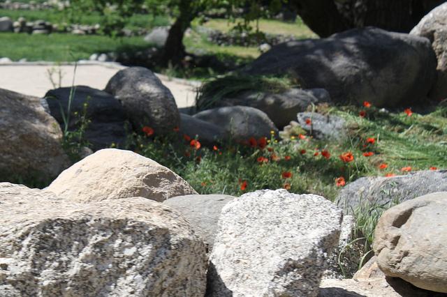 Afghanistan's Opium Solution