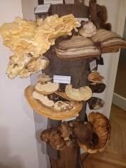 Zelenkasta raznocijevka i druge gljive / Foto: Vladimira Paleček