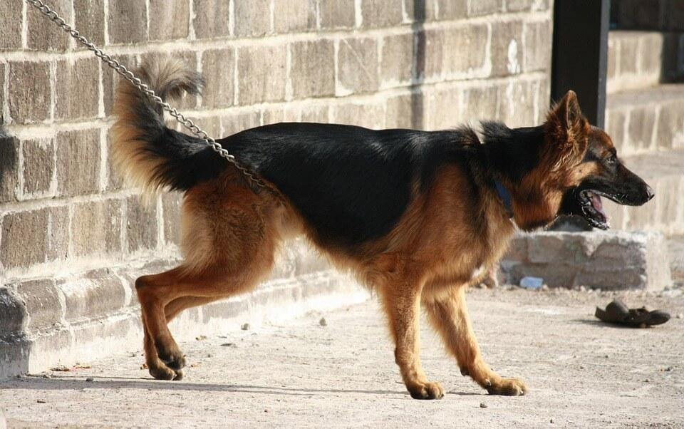 Umirovljenik zavezao psa za auto i vukao ga po cesti. Građani pozvali na linč starca!