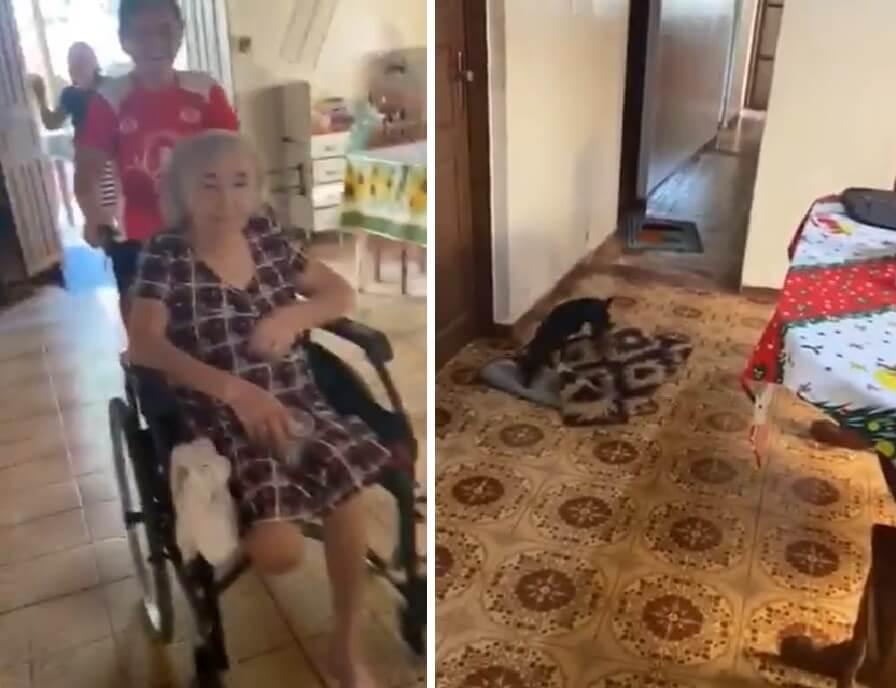 Nevjerojatan prizor: Pas pomiče tepihe kako bi baka u kolicima mogla lakše proći