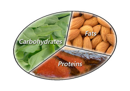 Protein Carb Fat Ratio For Building Muscle