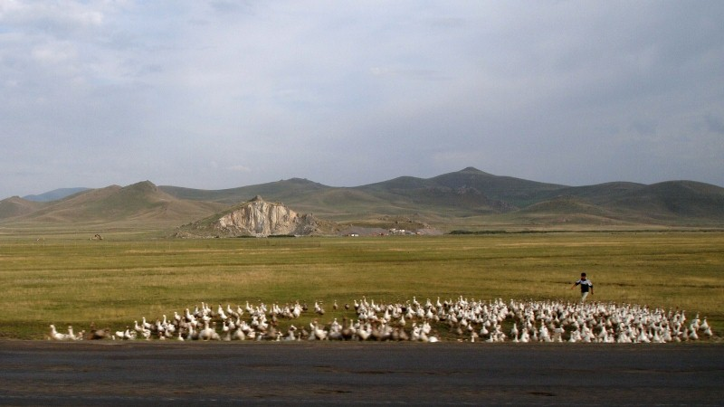 Erzurum, Turquía, Turkey, ducks