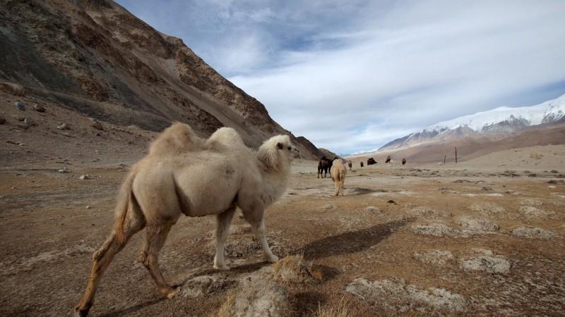 PB115355 China, Karakorum, karakul, silk road, ruta seda