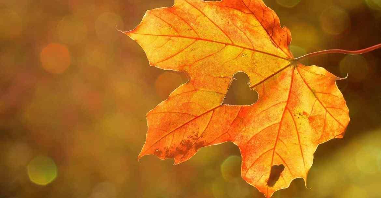 je vous livre quelques conseils pour bien passer la saison de l'automne et se ressourcer