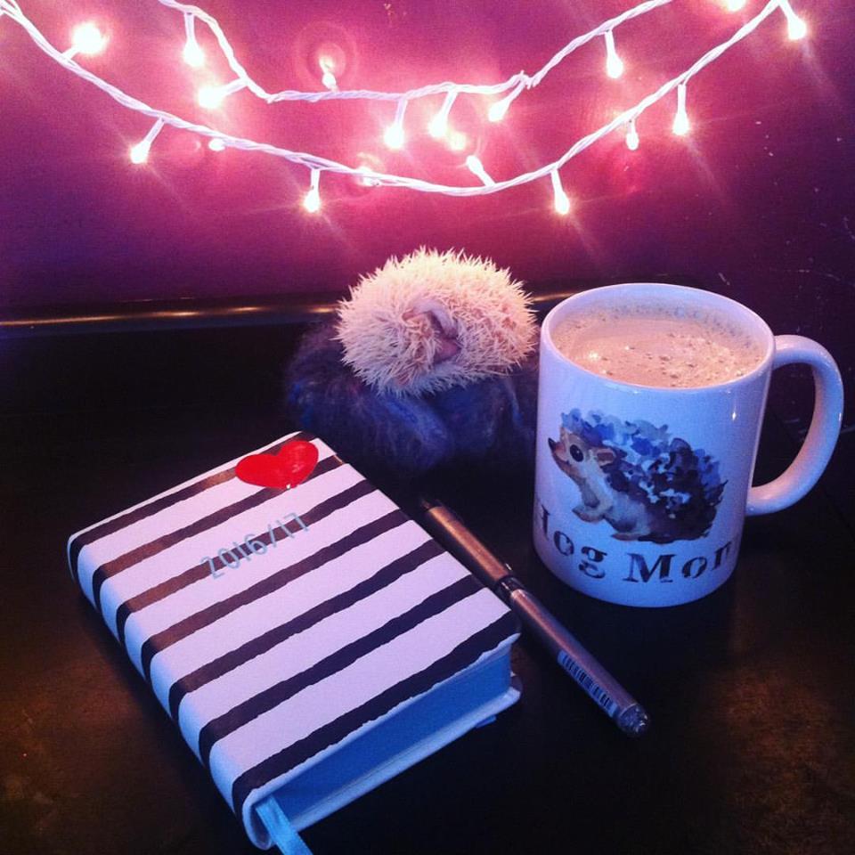 typo diary
