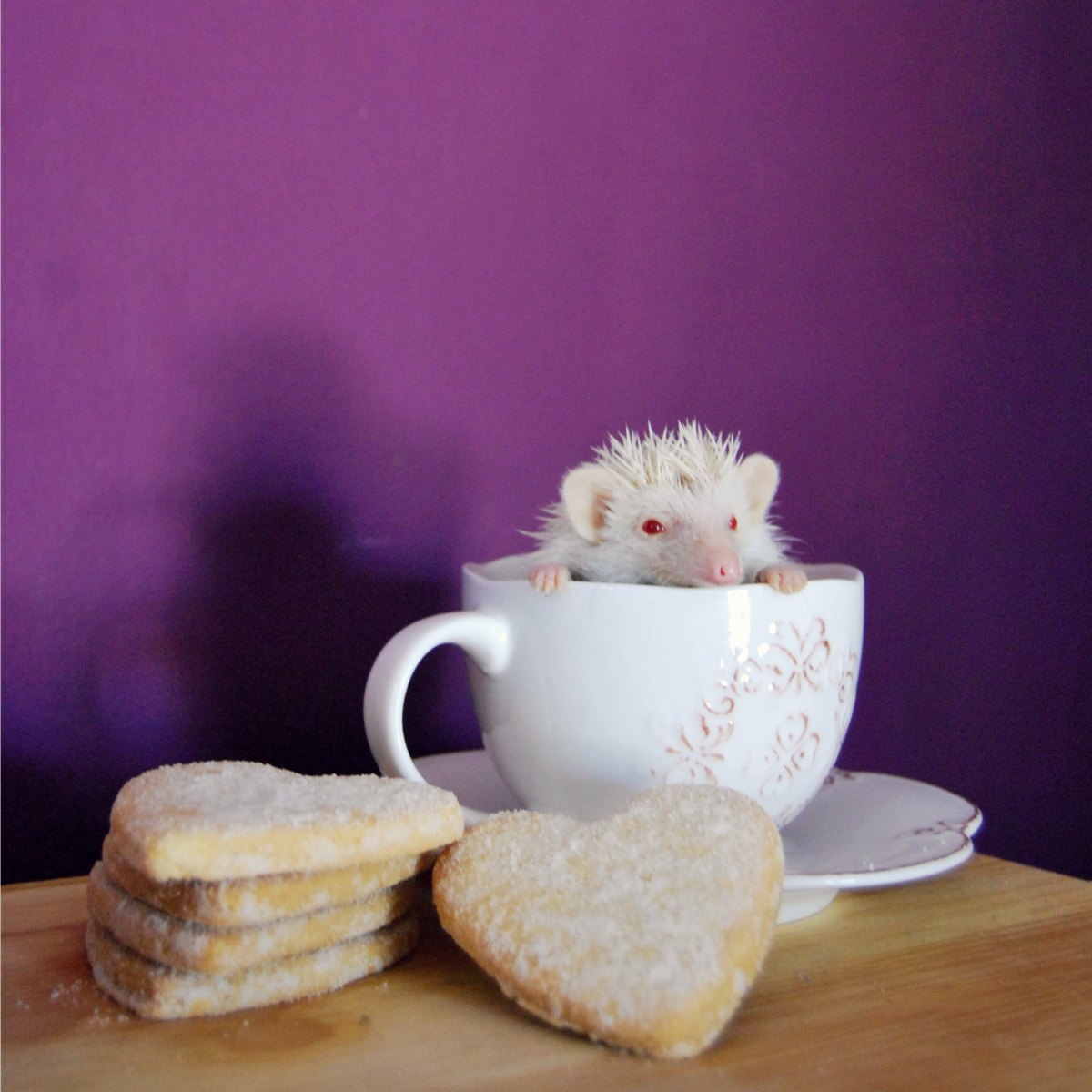 hedgehog tea cup