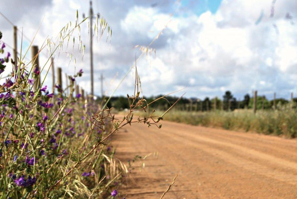 farm-roads