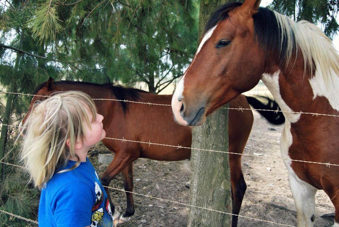 horse-whisperer
