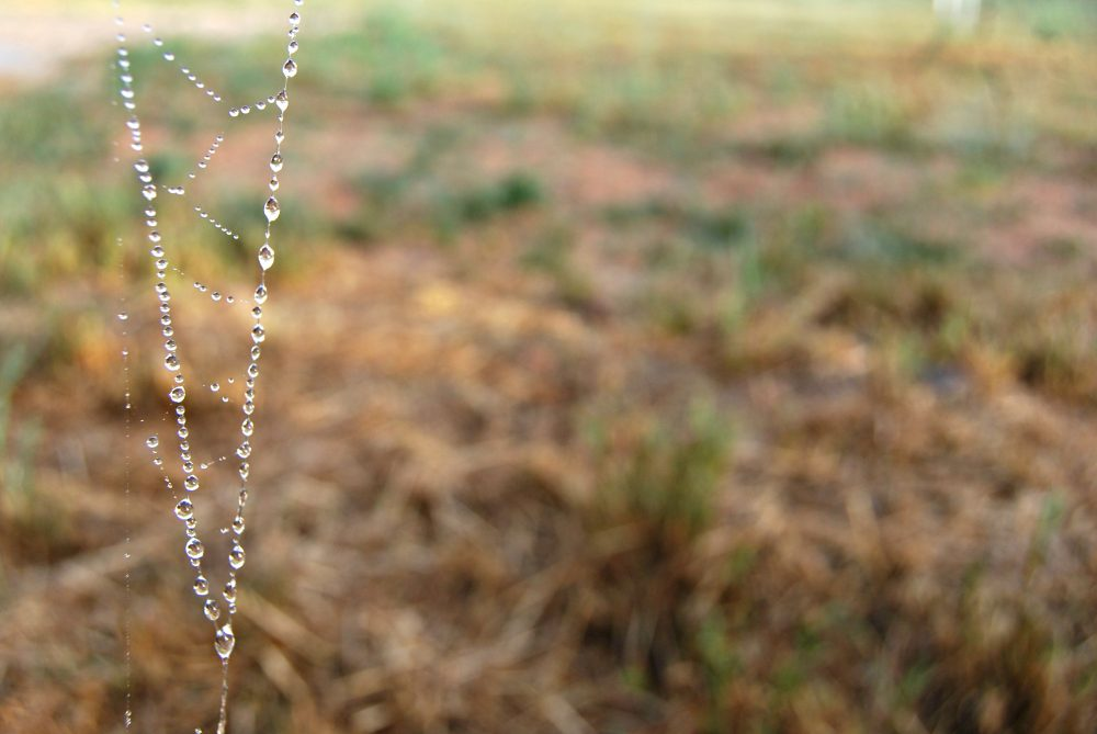 spidey-drops