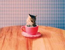 Cat for Tea
