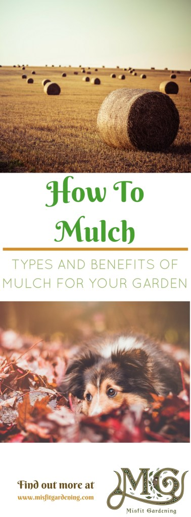 Find out about types and benefits of mulch. Click to find out how to mulch in your garden or pin it and save for later.