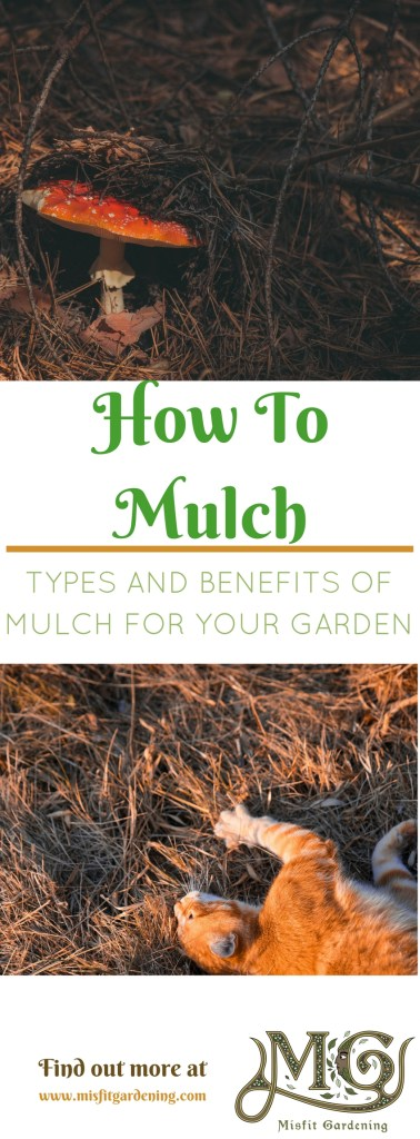 Types and benefits of mulch. Click to find out how to mulch in your garden or pin it and save for later.