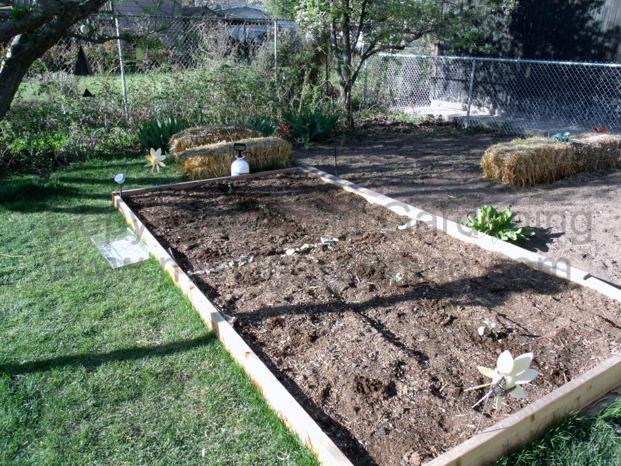 The start of the organic and biodynamic bed