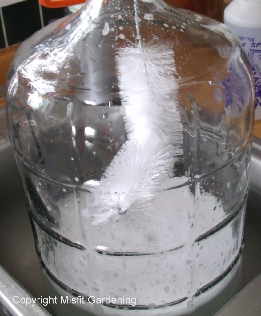 Cleaning a carboy