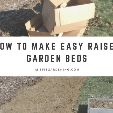 raised beds with cardboard organic no dig gardening