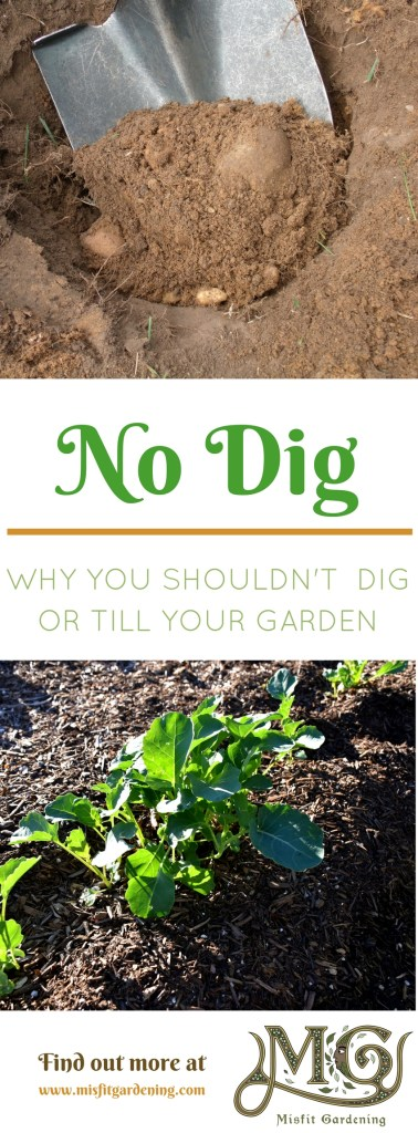 No dig gardening. Why you shouldn't be digging or tilling your garden. Click to find out more or pin it and save for later.